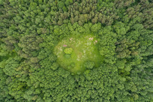 Aerial View Of Small Green Area Surrounded By Trees, Suuremıisa, L‰‰ne County, Estonia