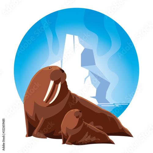 Fototapeta walrus at the north pole with cub, arctic landscape obraz