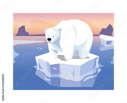 Fototapeta large polar bear on an ice floe drifting obraz