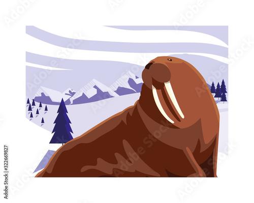 Fototapeta walrus at the north pole, arctic landscape obraz