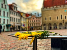 Tallinn Old Town  Hall Square Panorama , On Spring  Street Cafe Table Wooden Top Lay  Mimosa  Flowers   Travel To Capital City In Estonia ,Holiday In Europe