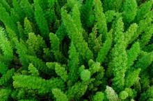 Arbustos Pequeños