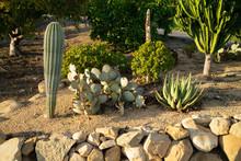 California Cactus Garden