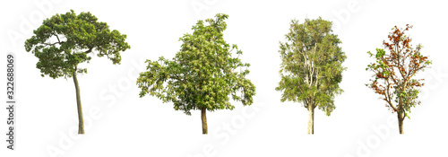 set 4 of Green tree isolate on white from nature. Canvas Print