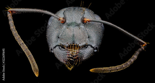 Extreme macro portrait of a black ant, sharp and detailed, magnified 10 times through a microscope objective Canvas-taulu