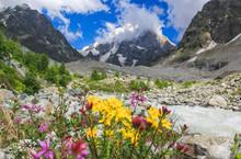 Bright Flowers On Alpine Meado...