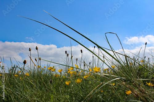 Wildflowers in Ireland (IRE 0588)