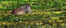 Landscape With A Zebra Lying I...