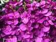 Leinwanddruck Bild - Romantic of Purple orchid background, Backdrop for special card. purple pattern. Artificial flowers