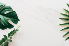 Tropical Green Leaf On White M...