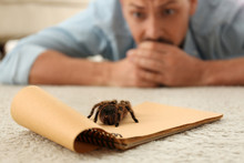 Man And Tarantula On Carpet. A...