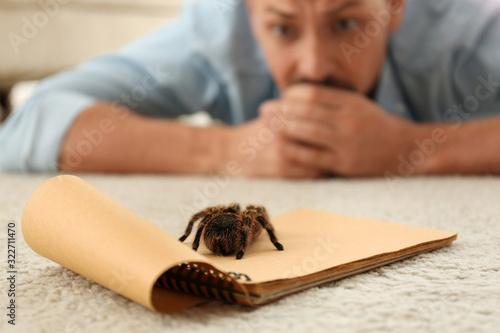 Photo Man and tarantula on carpet. Arachnophobia (fear of spiders)