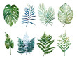 canvas print picture Beautiful watercolor tropical leaves painted on white paper