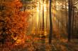 Walk in the autumn forest. Sun rays. Autumn colors. Fog.
