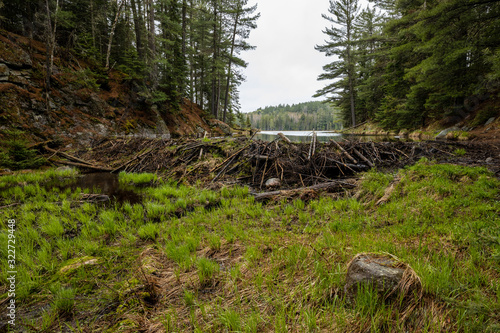 A Beaver Dam in the wilderness of Algonquin in Canada Wallpaper Mural