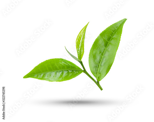 Fototapety, obrazy: green tea leaf isolated on white