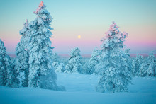 Cold Day In Lapland