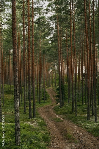 Vertical shot of a path in the spruce forest