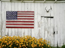 Painted Wooden American Flag, Deer Antlers, And A Beautiful Brown-eyed Susan Flowers In An Old Shed