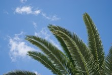 Low Angle Shot Of The Branches Of A Palm Tree With The Sky In The Background