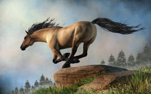A Grulla Coated Horse Gallops Over Rocky Green Hills Through The Springtime Morning Mists. 3D Rendering