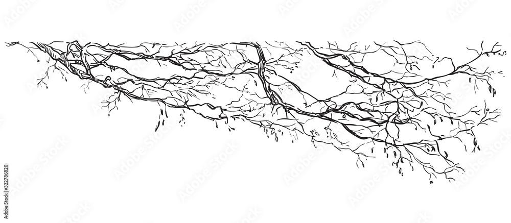 Fototapeta Vector hand drawing branch 2