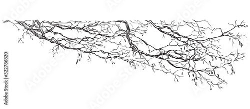 Fotomural Vector hand drawing branch 2