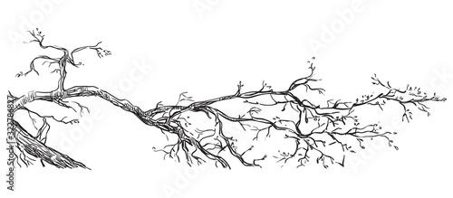 Obraz na płótnie Vector hand drawing branch