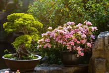 Chinese-style Garden Corner. P...