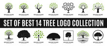 Set Of Best Tree Logo Collecti...
