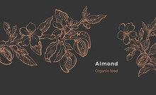 Almond Template. Vector Natura...