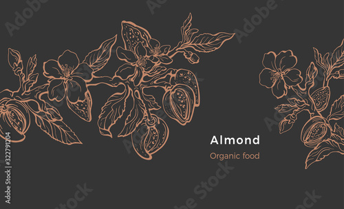 Almond template. Vector natural nut. Organic milk, oil Fototapet