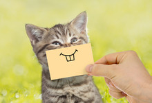 Funny Cat Portrait With Smile ...