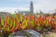 Leuchtturm und exotische Vegetation