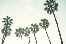 Palm Trees Over A Blue Sky Min...