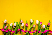 ColorfulTulip Spring Flowers. ...