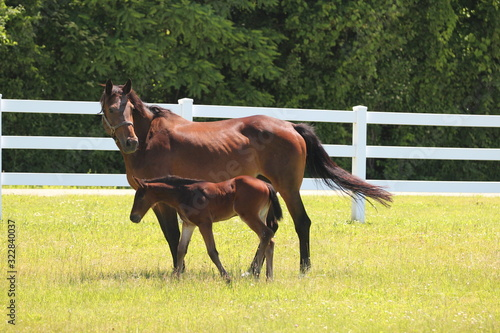 Canvas Print Mare and foal