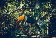 Tucano Parque Das Aves Foz Do Iguaçu
