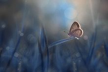 Butterfly On A Blade Of Grass, Indonesia