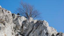 Drzewo Na Skale 2
