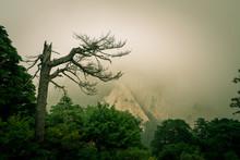 Barren Tree On Hua Shan Mountain