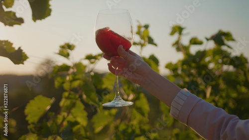 Fototapeta Close up hands young woman stand the vineyards raises the red wine glass grape at sunset organic connecting with nature agriculture sunny travel countryside field green rural slow motion obraz na płótnie