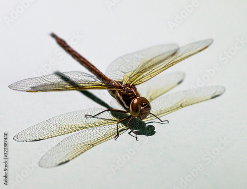 dragonfly with white background  macro style Wallpaper Mural