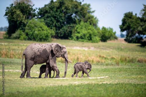 Photo Elephant Family