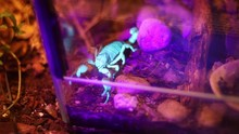 Scorpion Shiny Burrow Or Yello...