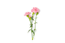 Bouquet Of Pink Carnation Flow...