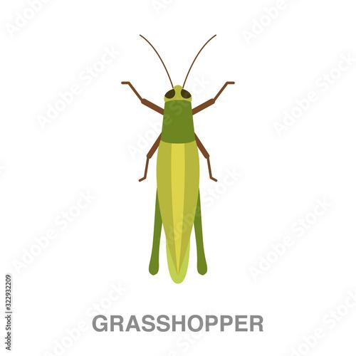 Obraz na plátně grasshopper flat icon on white transparent background