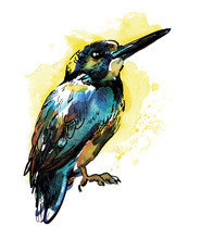 Bird Of Kingfisher. Drawing By Hand In Vintage Style, Children's Drawing. Brilliant, Colorful Drawing.