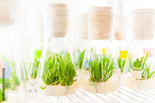 Photo plants in laboratory