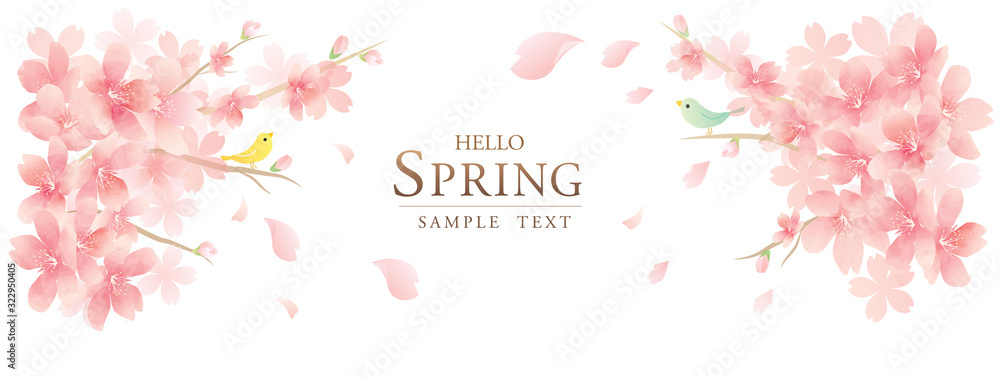 Fototapeta spring cherry blossom background モダンで上品な花のベクター背景